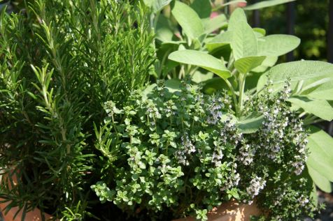 Growing herbs | KitchAnn Style