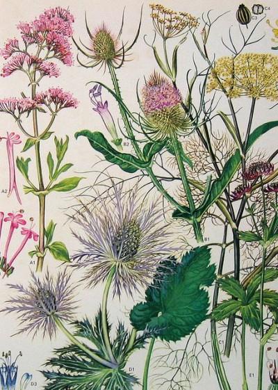 Buoyant Colormix Theme Botanical Print | KitchAnn Style